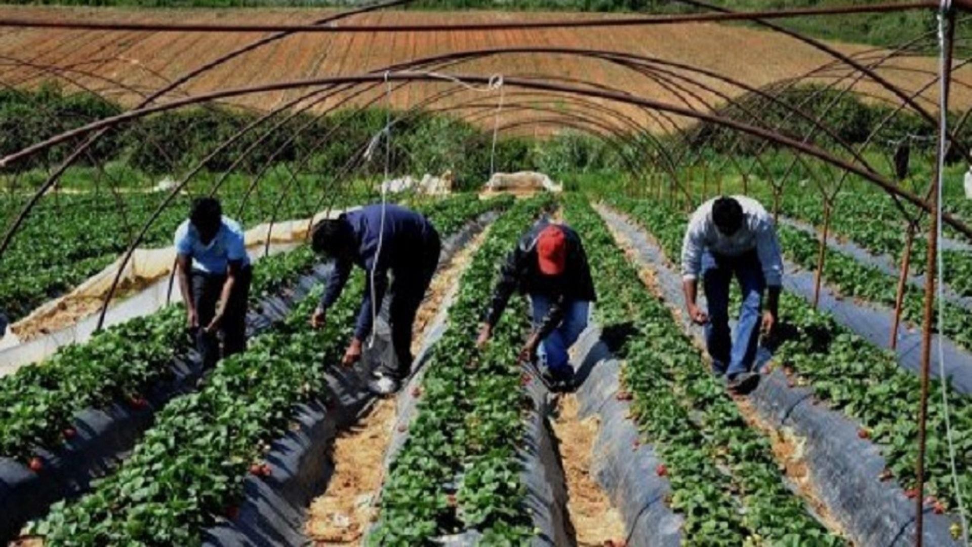 braccianti-agricoli-stranieri
