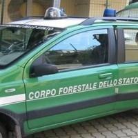 comando-forestale_1_original
