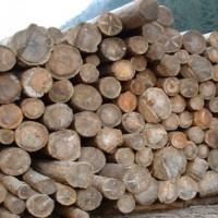 materiale legnoso