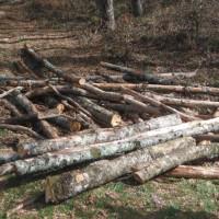 taglio abusivo di legna