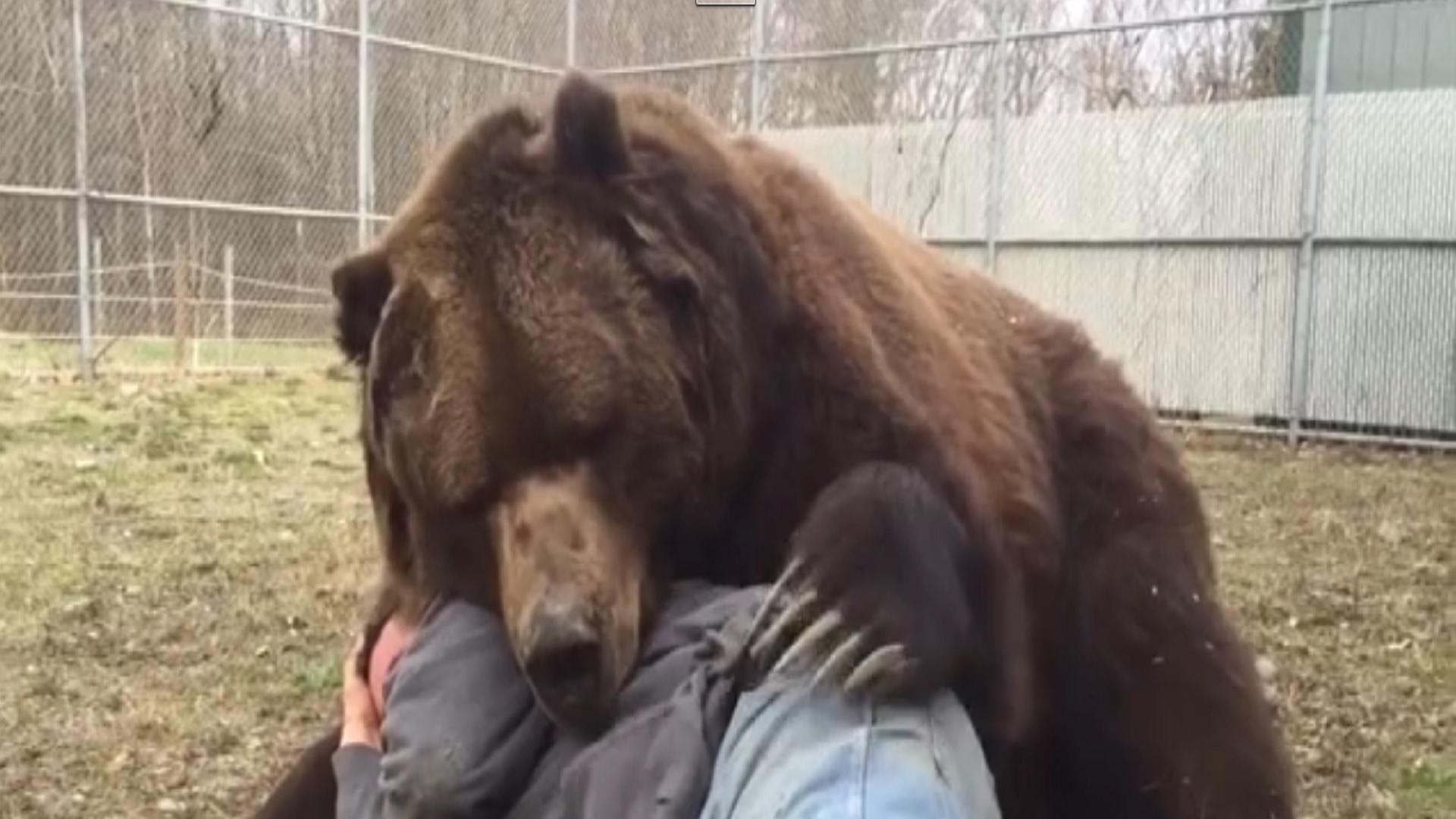 Jimbo l orso pi grande del mondo for Affittare una cabina grande orso
