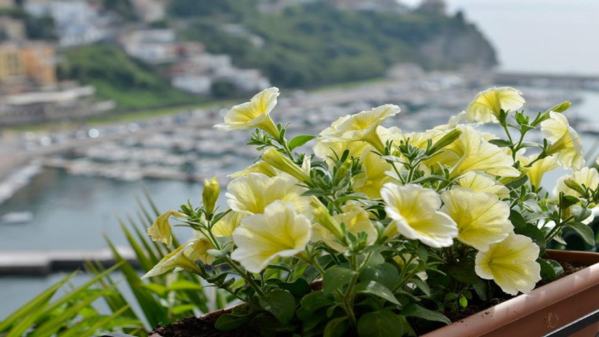 Borgo in fiore fiore