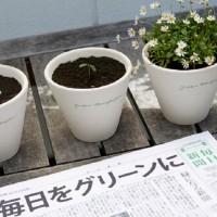 giornale che si pianta