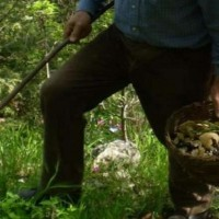 cercatore di funghi