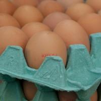 uova-contaminate-fipronil