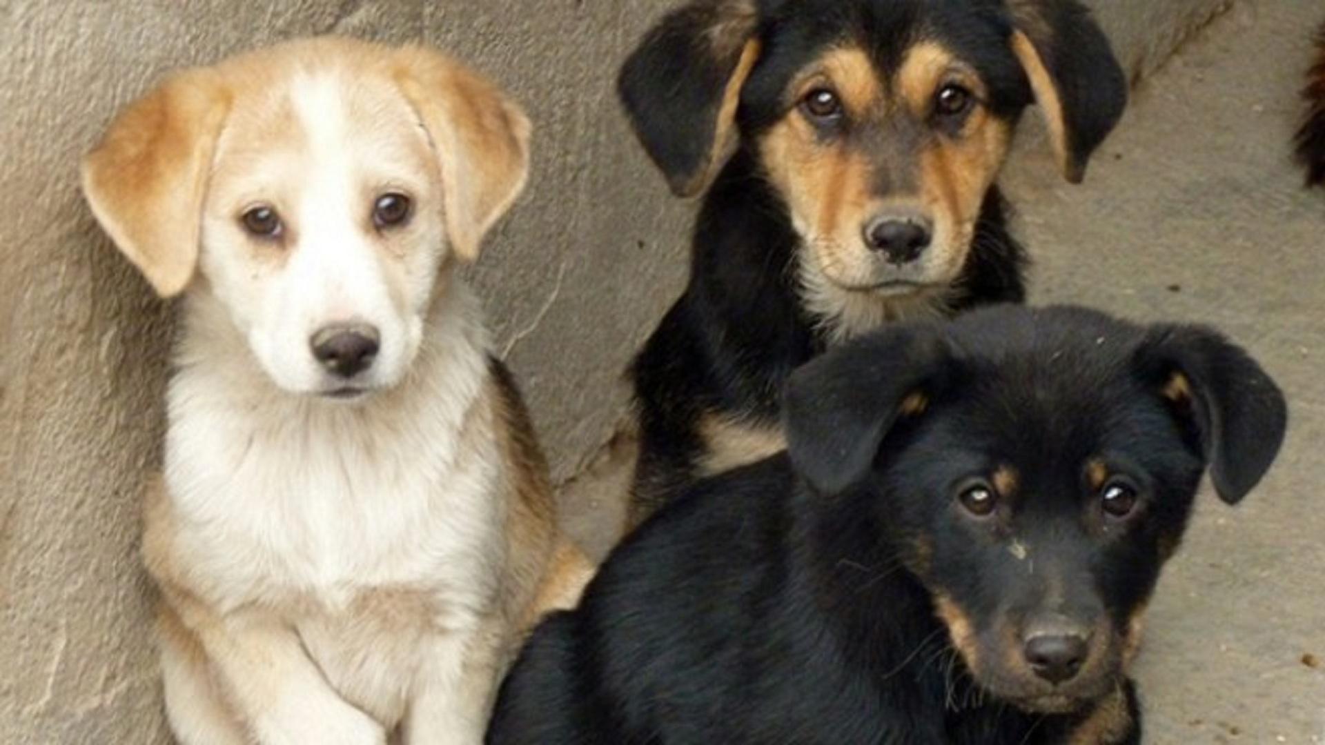 cuccioli-adozione-cani