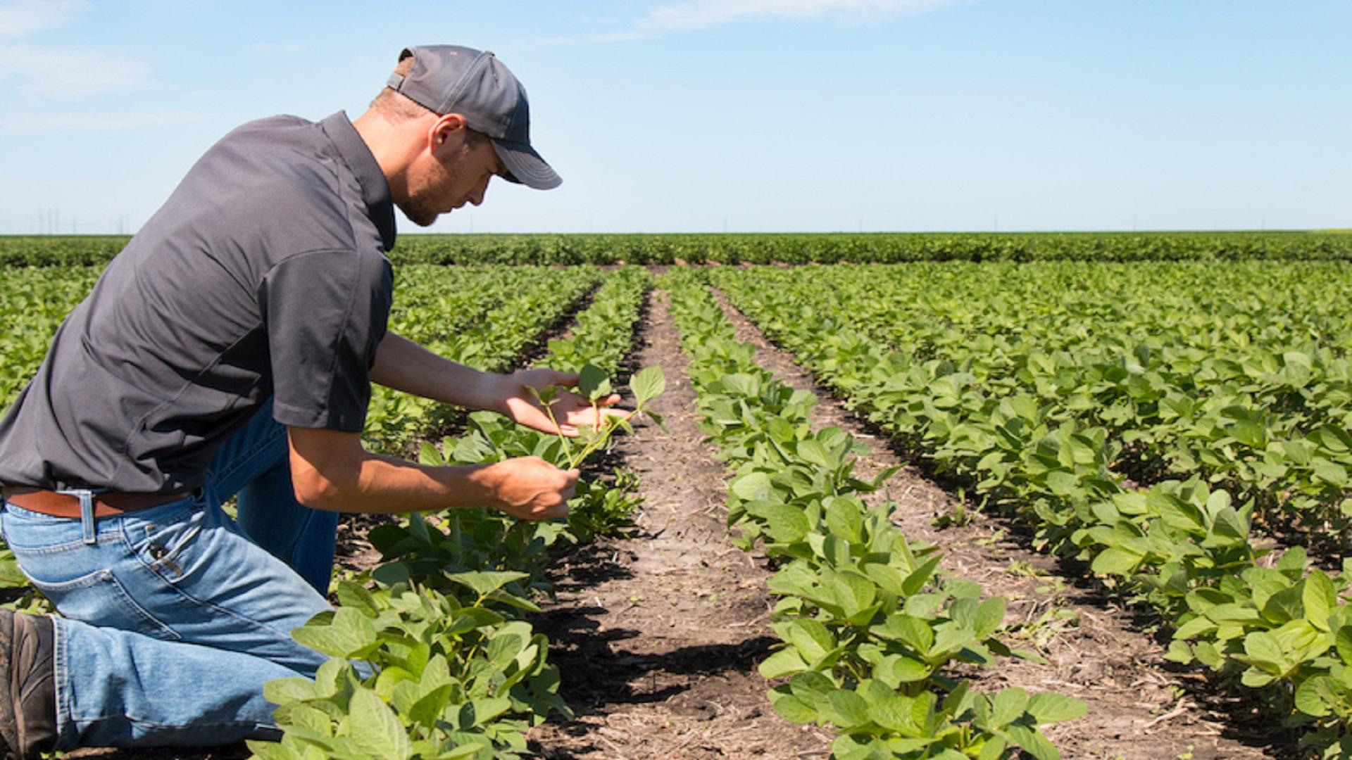 agricoltore_azienda