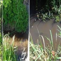 fiume inquinato spinazzo
