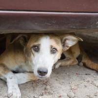 Street dog in New Delhi, India.