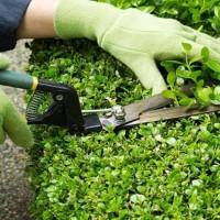 doktor-green-giardiniere