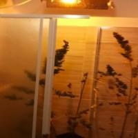 marijuana in bagno