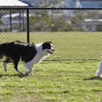 http___media.petsblog.it_a_aad_area-cani