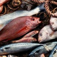 img1024-700_dettaglio2_pesce-fresco---foto-tips