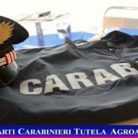 carabinieri_agroalimentare