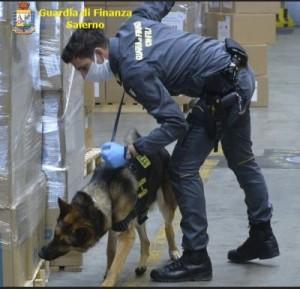 finanza droga salerno cani